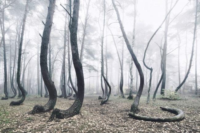 Bu ormanın gizemi çözülemiyor 10