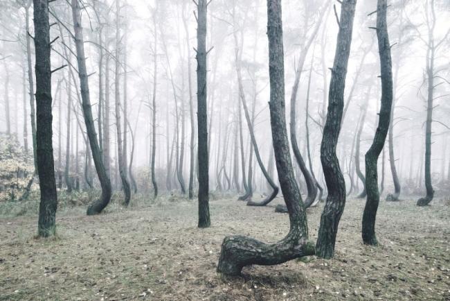 Bu ormanın gizemi çözülemiyor 12