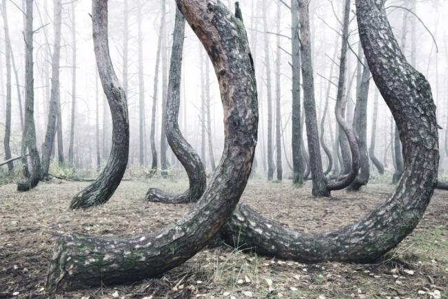 Bu ormanın gizemi çözülemiyor 13