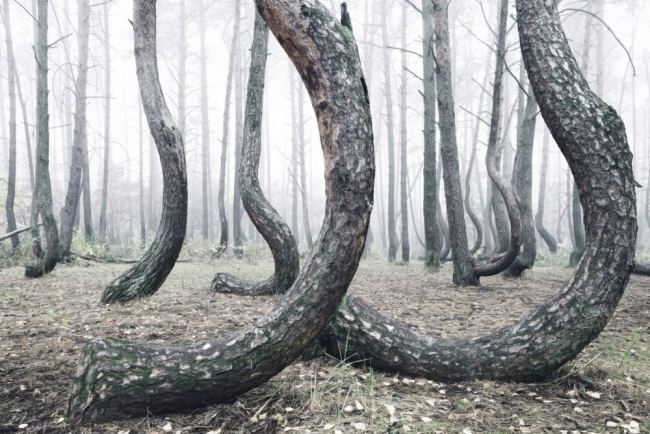 Bu ormanın gizemi çözülemiyor 14