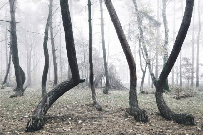 Bu ormanın gizemi çözülemiyor 3