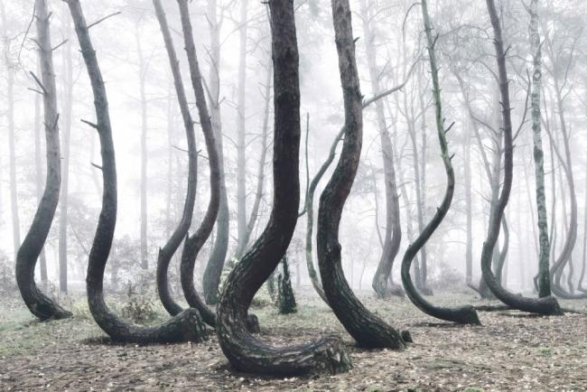 Bu ormanın gizemi çözülemiyor 4