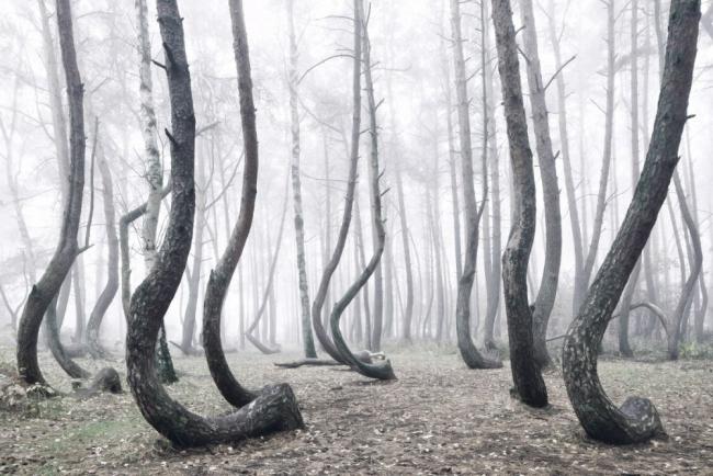 Bu ormanın gizemi çözülemiyor 7