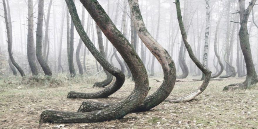 Bu ormanın gizemi çözülemiyor