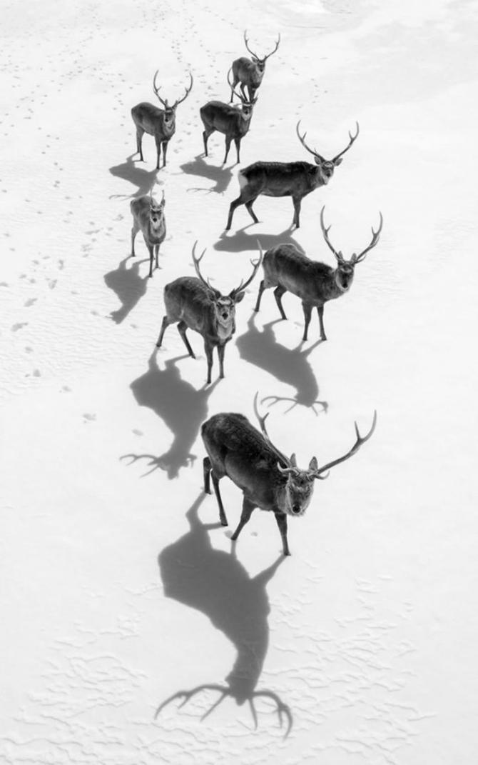 2017 National Geographic Seyahat Fotoğrafları Yarışması'nın en iyileri 14