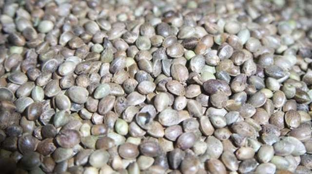 İbn-i Sina'nın 1000 yıl önce hazırladığı reçeteler 12