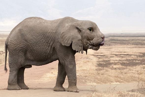 Hibrit hayvanların inanılmaz görüntüleri 1