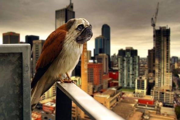 Hibrit hayvanların inanılmaz görüntüleri 11
