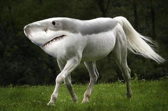 Hibrit hayvanların inanılmaz görüntüleri 12