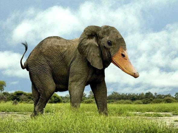 Hibrit hayvanların inanılmaz görüntüleri 15