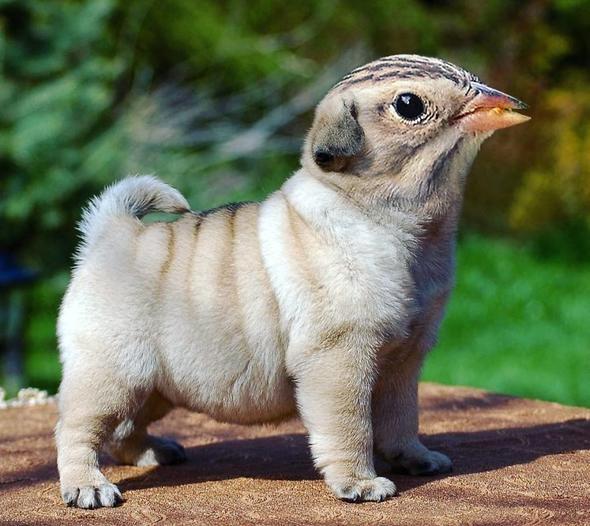Hibrit hayvanların inanılmaz görüntüleri 16