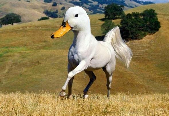 Hibrit hayvanların inanılmaz görüntüleri 17