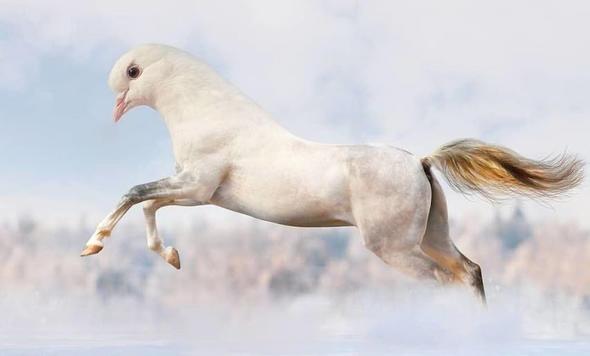 Hibrit hayvanların inanılmaz görüntüleri 19
