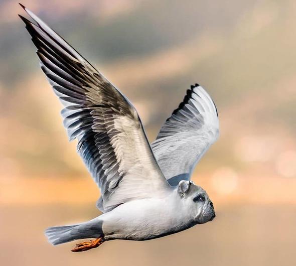Hibrit hayvanların inanılmaz görüntüleri 22