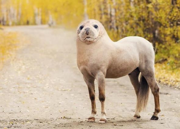 Hibrit hayvanların inanılmaz görüntüleri 31