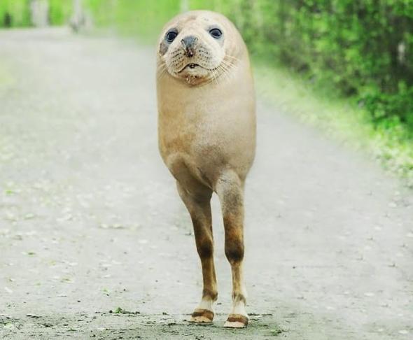 Hibrit hayvanların inanılmaz görüntüleri 32