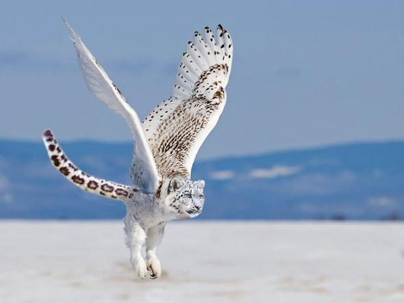 Hibrit hayvanların inanılmaz görüntüleri 36