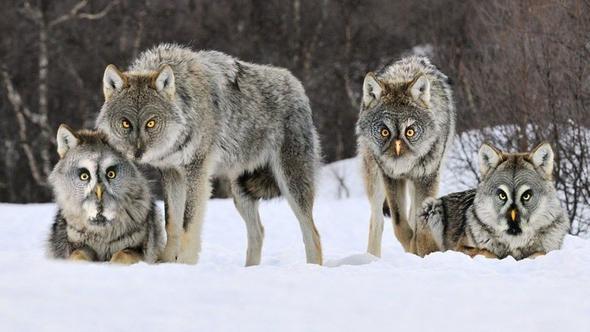 Hibrit hayvanların inanılmaz görüntüleri 37