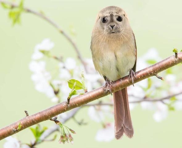 Hibrit hayvanların inanılmaz görüntüleri 7