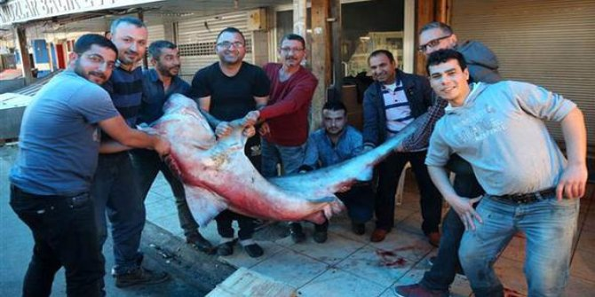 5 metre boyunda köpek balığı