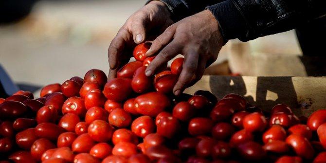 Rusya 'domates yasağı'nı kaldırmayacak