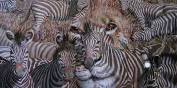 Fotoğrafa bakınca ilk gördüğünüz hayvan kişiliğiniz hakkında bilgi veriyor