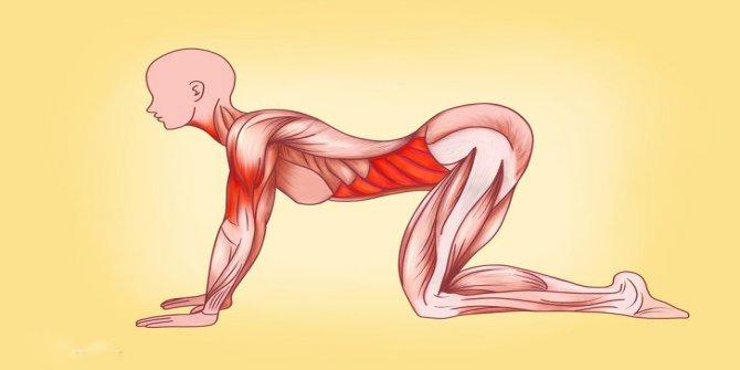 Kadın vücudu için mükemmel Japon egzersizleri
