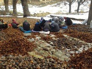 Konya'da müthiş ağaçlandırma çalışması