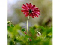 Çiçek sepeti nasıl sipariş edilir?