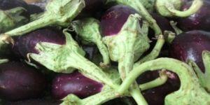 Basurun Çaresini Uzakta Aramayın: Mucize Çöpe Attığımız Patlıcanın Saplarındaymış