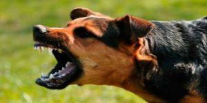 Köpek saldırıları artabilir