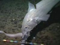 En derinde yaşayan balık görüntülendi