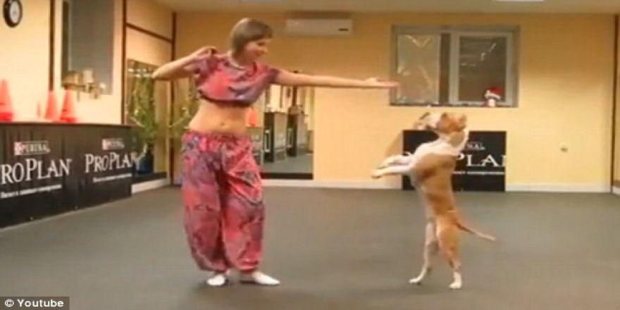 Bu köpeğin yetenekleri var!